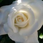 A Fleurs d'Ô
